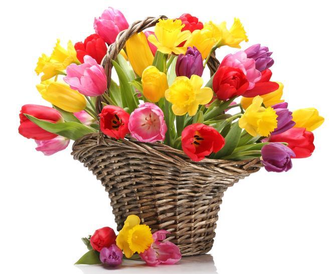 https://www.efiorista.com/images/cesto_di_tulipani_multicolore.JPG