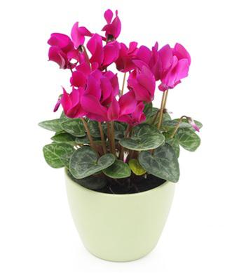 Efiorista online in italia ti aiuta a regalare e for Pianta fiorita da esterno