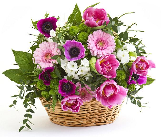 Fiori primavera efiorista online in italia ti aiuta a for Fiori e piante online