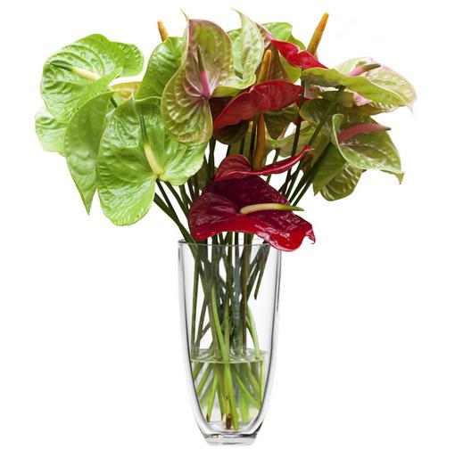 Efiorista online in italia ti aiuta a consegnare o for Anthurium rosso