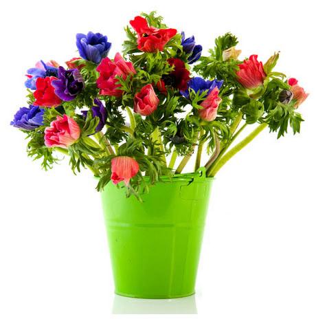 fiori primaverili in vaso