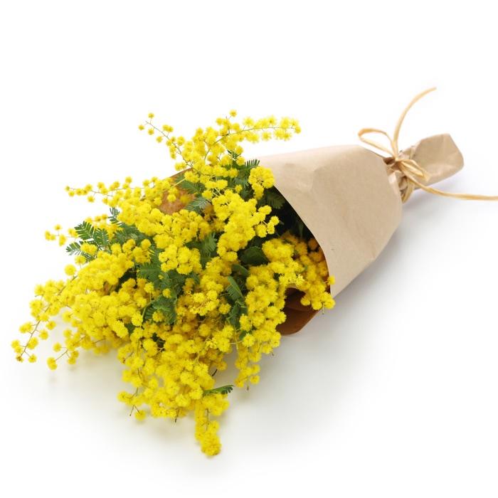 mazzo di mimose da