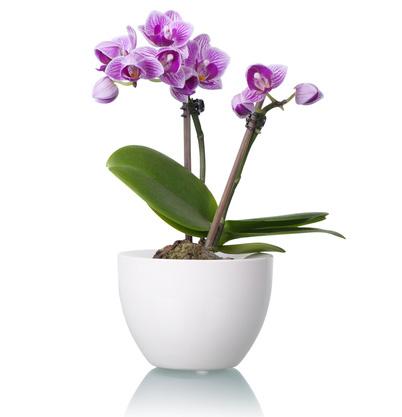 Efiorista online in italia ti aiuta a regalare e - Cerco piante da giardino in regalo ...